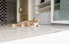 ペットを見守る監視カメラの機能