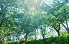 木漏れ日森