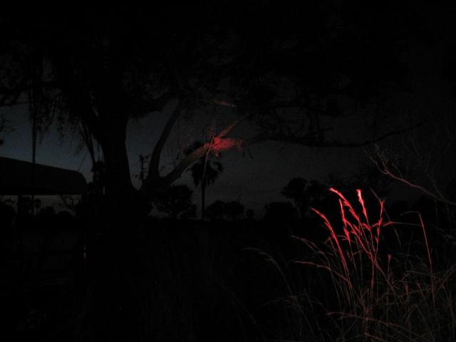 赤外線撮影